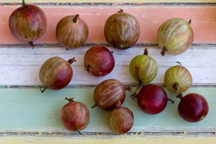 fruits-1533757.jpg